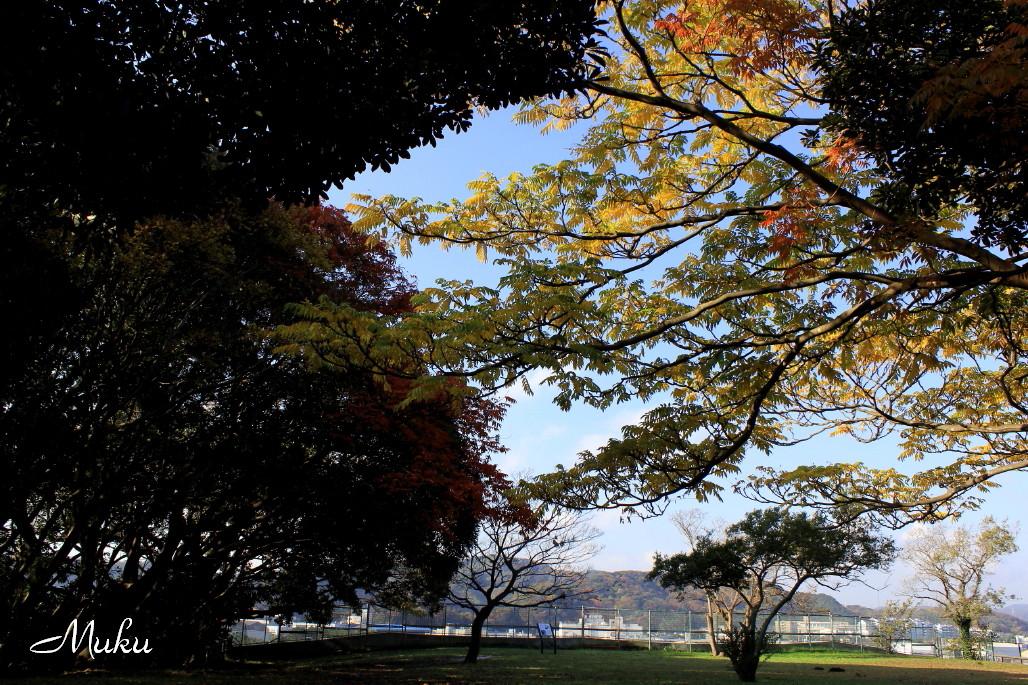 2014.11.30 吉井貝塚の紅葉 (散歩道:神奈川県横須賀市)