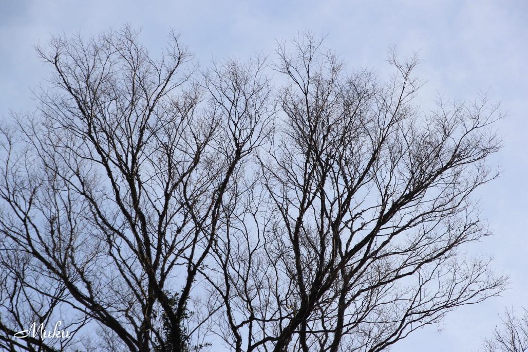 2014.12.21 冬木立 (南葉山霊園:神奈川県横須賀市)