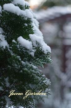 141裏庭雪