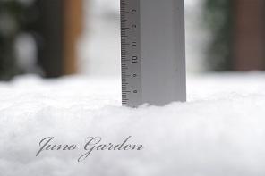 7.5センチ雪