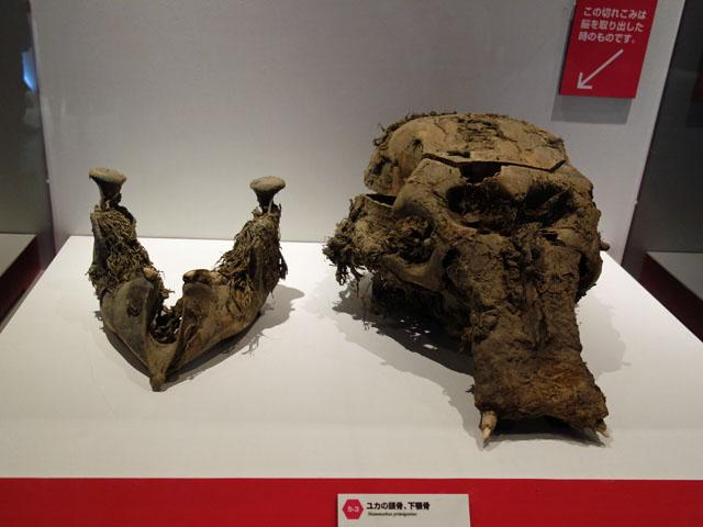 YUKAの頭蓋骨
