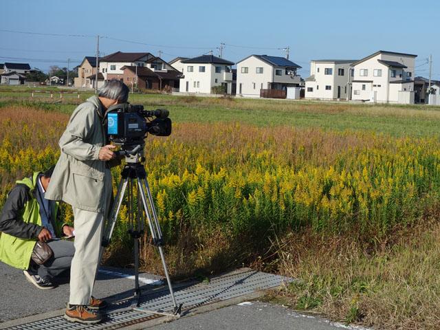 NHKの報道