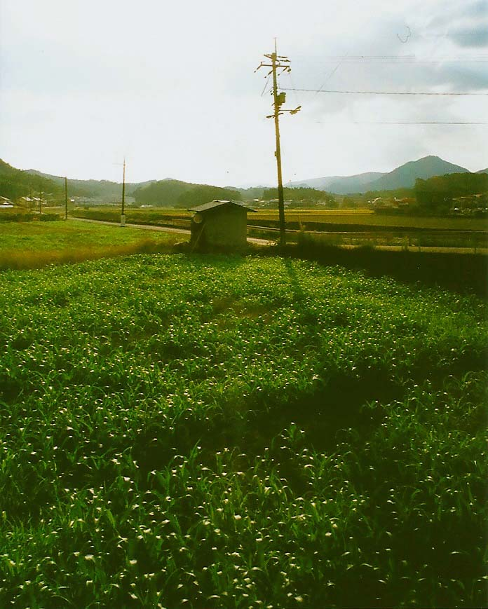 1大阪ー鹿児島 (59)_1