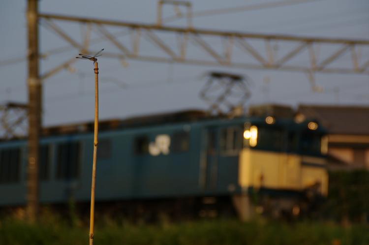2012年9月20日 鹿島貨物 020