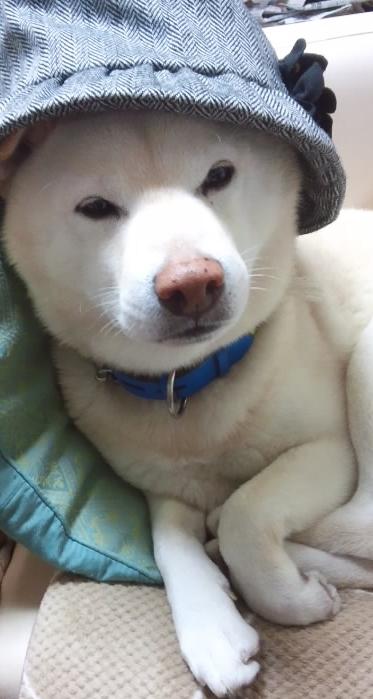 kaitobousisugata201212.jpg