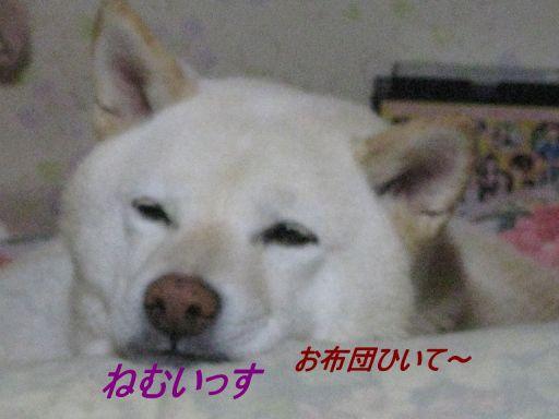 s_IMG_6670.jpg