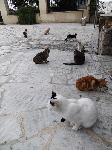 アテネ_アクロポリスの北で (3)