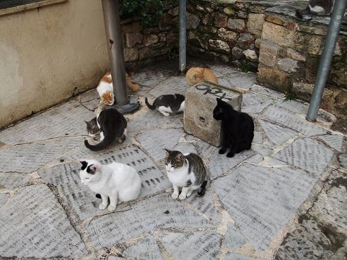 アテネ_猫給食の時間 (4)