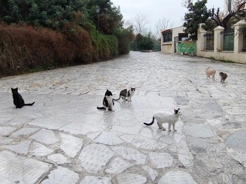 アテネ_猫給食の時間 (1)