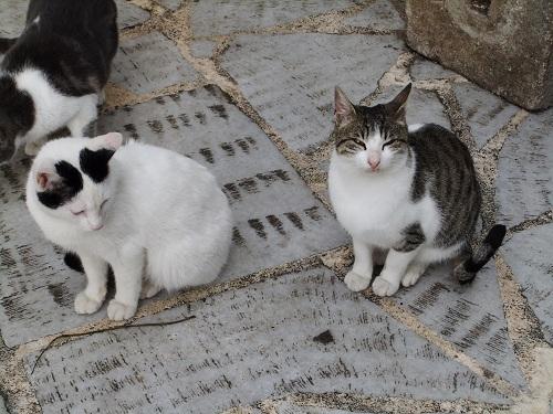 アテネ_猫給食の時間 (3)