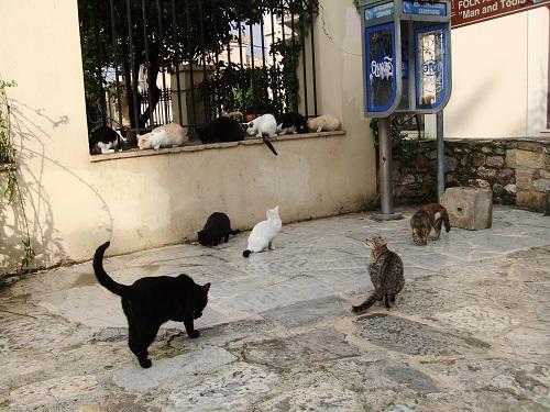 アテネ_猫給食の時間 (2)