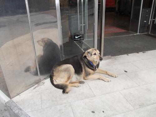 アテネ_賢い犬さん