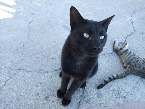 モネムヴァシアの猫さん (1)