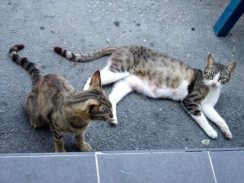 エラフォニソスの猫さん