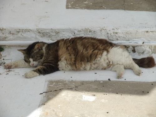 キティラ_ホラの猫さん