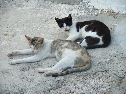 アンディキティラの猫さん (2)
