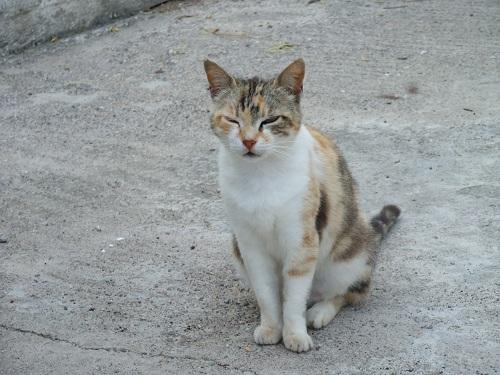 アンディキティラの猫さん (3)