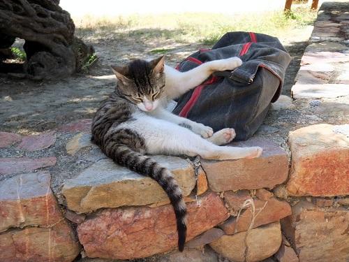 ヴーヴェスの猫さん (1)