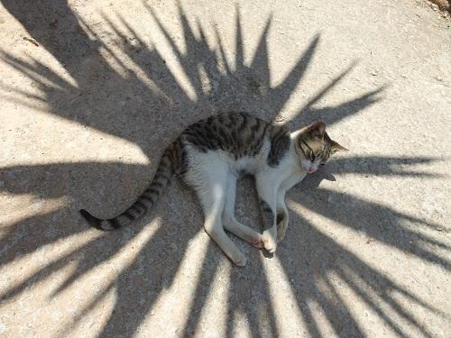 ヴーヴェスの猫さん (2)