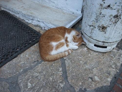 スペツェスの猫さん (1)