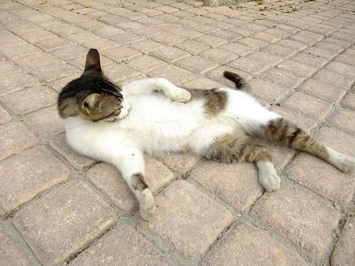 スペツェスの猫さん (2)