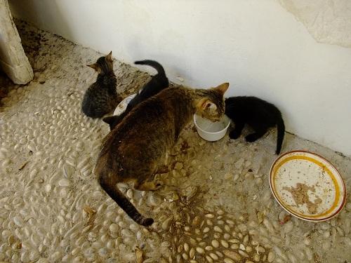 スペツェス_Αγ.ニコラオスの猫さん (1)
