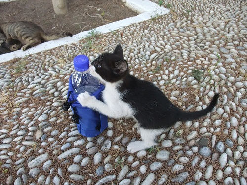 スペツェス_Αγ.ニコラオスの猫さん (3)