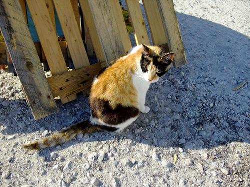 スペツェス_オールド・ハーバー近くの猫さん (3)