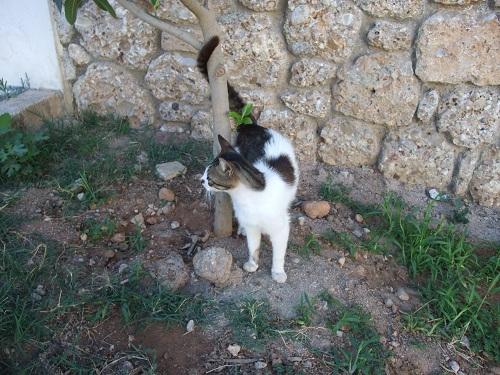 スペツェス_オールド・ハーバー近くの猫さん (1)