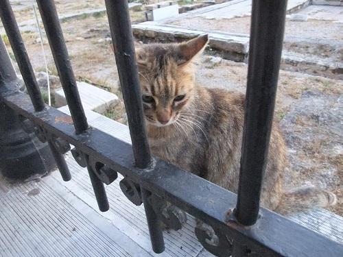 アテネ_風の塔で (1)