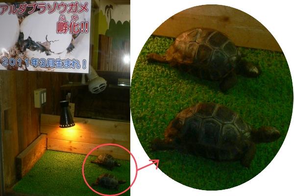 2012/04/29-07 伊豆アンディランド