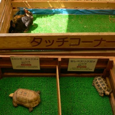 2012/04/29-08 伊豆アンディランド