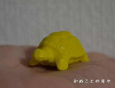 DSC_0182-kame.jpg