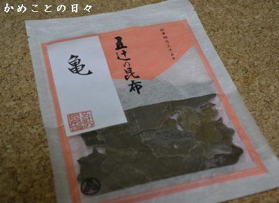 DSC_0491-kame.jpg