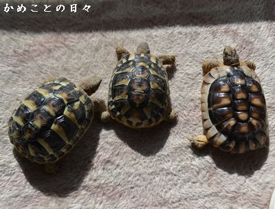DSC_0618-riku_20140127224708b98.jpg