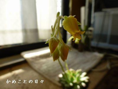P1100334-tani.jpg