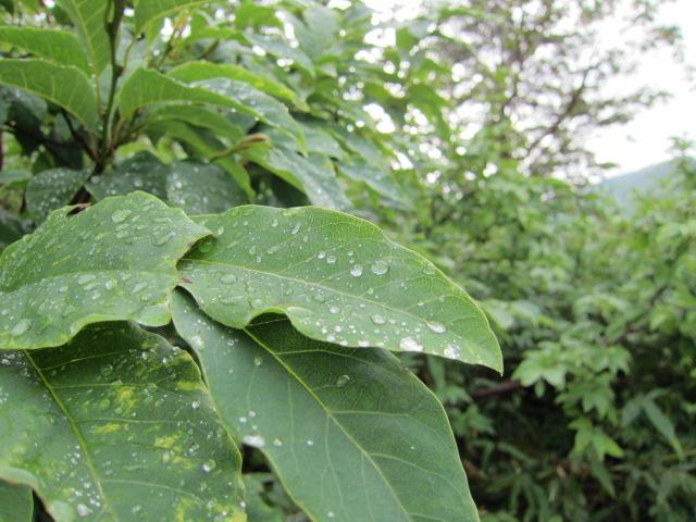 玉川温泉 雨上がり