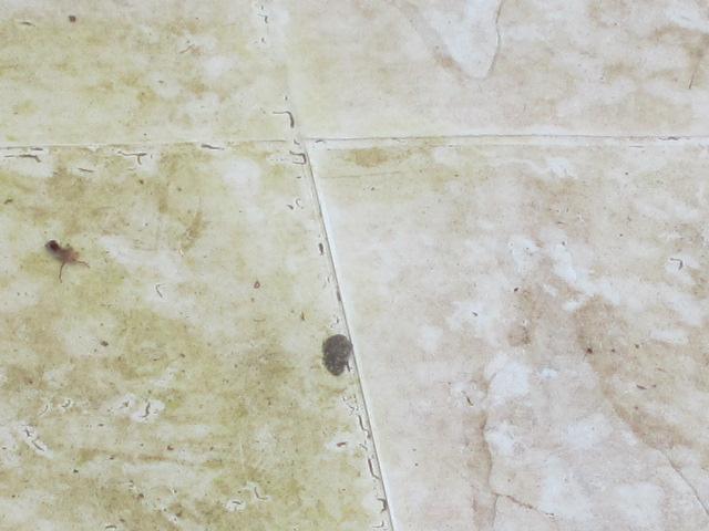 ゴミ? 2012 玉川温泉