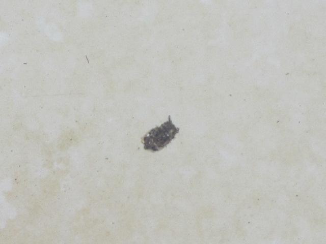 なんのヤゴ? 2012 玉川温泉