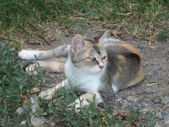 甲府のネコ のんちゃんをガン見