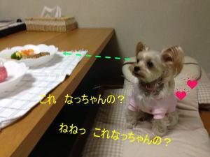 20130301009.jpg