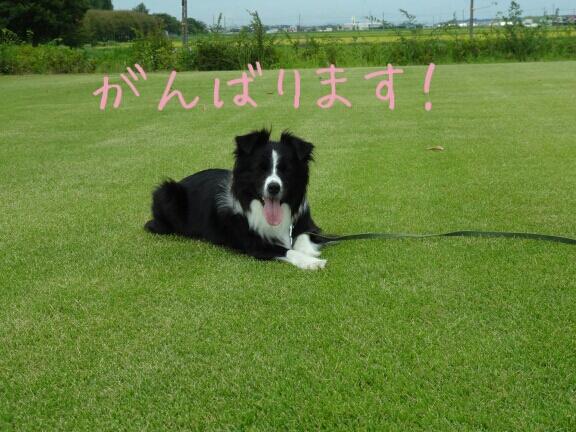 fc2blog_2012091601241636c.jpg