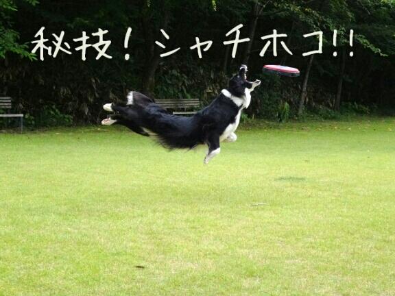 fc2blog_2012092102522572f.jpg