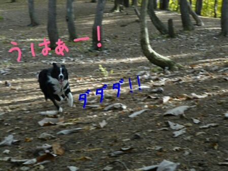 fc2blog_20121101004422e42.jpg