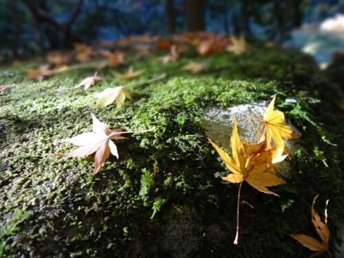 fc2blog_201211182322439e9.jpg