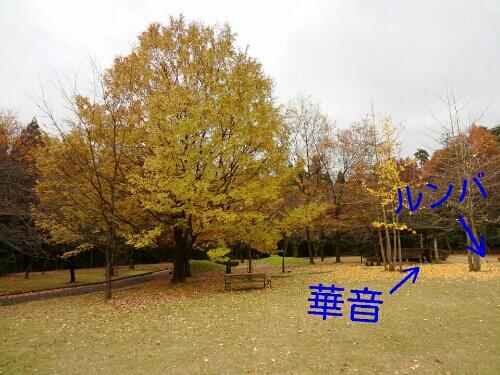 fc2blog_20121208004728055.jpg