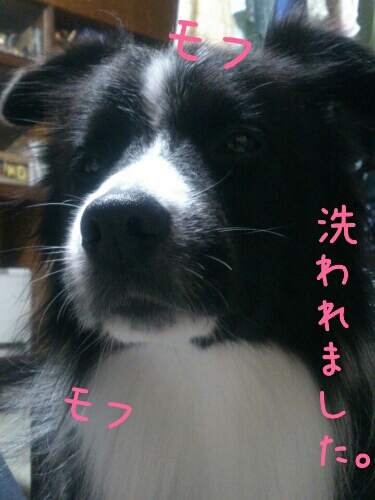 fc2blog_2012121001331896a.jpg