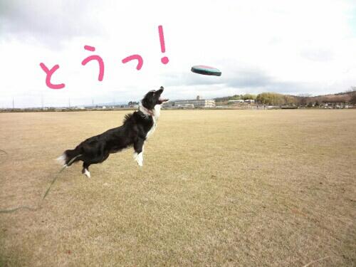 fc2blog_20121217002307f9e.jpg