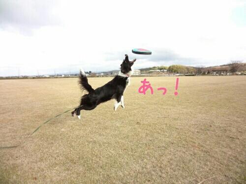 fc2blog_20121217002343e2e.jpg