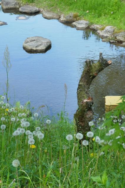 20120504-008.jpg